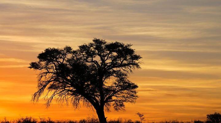 boom in zuidafrica