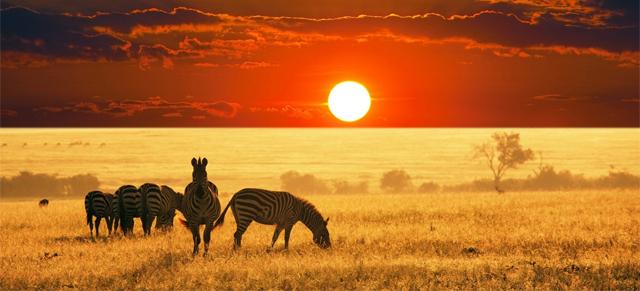 zebra in zuidafrica